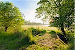 Wooden bridge crossing stream to grassy field in morning light in sprintime in Hesse, Germany