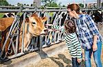 Female farmer and boy petting cow on organic dairy farm