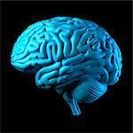 Human brain, computer illustration.