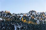 Snow covered trees on cascade mountain range, Diablo, Washington, USA