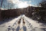 Husky dogs pulling sledge
