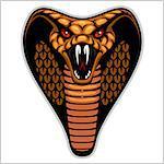 Snake head - isolated on white - vector illustration