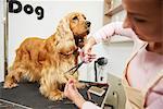 Female groomer trimming cocker spaniel at dog grooming salon