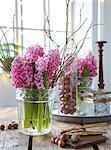 Pink hyacinths in vase