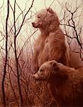 TWO STUFFED BROWN KODIAK BEARS FROM ALASKA TAXIDERMY NATURAL HISTORY MUSEUM DISPLAY CASE WINDOW