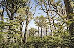 View of forest, Coyhaique National Reserve, Coyhaique Province, Chile