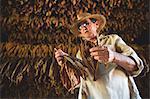 Cuba, Republic of Cuba, Central America, Caribbean Island. Havana district. Tobacco farm in Pinal dal Rio, man at work