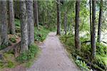 Lakeside path on Lake Grosser Arbersee, Bayerisch Eisenstein in the Bavarian Forest in Bavaria, Germany