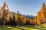 Sunny day in the Dolomites,Cortina d'Ampezzo,Belluno district,Veneto,Italy,Europe