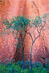 Uluru (Ayers Rock), Uluru-Kata Tjuta National Park, Northern Territory, Central Australia, Australia. Details of the red rock and vegetation.