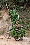Bicycle on dirt track stacked with bunches of bananas, Masango, Cibitoke, Burundi, Africa