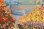 Europe,Italy,Umbria,Perugia district,Montefalco. Vineyards in autumn