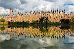 Kakku, Taunggyi, Shan State, Myanmar (Birmania). The 2478 stupas site in Kakku reflected in the water.