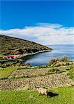Island of the Sun, Titicaca Lake, La Paz Department, Bolivia, South America