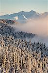 Pines covered in snow and Dolomites on the background. Passo delle Erbe, Bolzano, Trentino Alto Adige - Sudtirol, Italy, Europe.