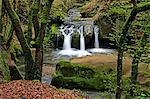 Forest brook, Schiessendumpel, Mullerthal, Luxembourg, Europe