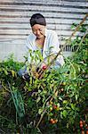 Smiling woman kneeling in garden, picking tomatoes.