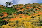 Walker Canyon, Lake Elsinore, Riverside County, California, United States of America, North America