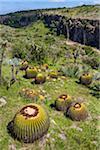 Barrel cactus in a field at the Botanic Gardens (Charco Del Ingenio) near San Miguel de Allende, Mexico
