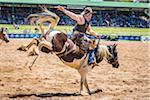 Bucking bronco rider at the Warwick Rodeo in Warwick, Queensland, Australia
