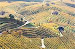 Vineyards of Prosecco wine in autumn, Valdobbiadene area, Treviso, Veneto, Italy