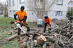Arborists cutting logs