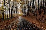 A rural road in Sweden