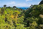 Jungle on the island of Bioko, Equatorial Guinea, Africa