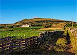 Landscape with Caldeira in the background, Graciosa Island, Azores, Portugal, Atlantic, Europe
