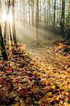Sunlight through trees in forest, Bainbridge, Washington, United States