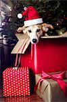 Dog in box, wearing Santa hat