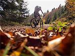Mountain biker climbing track in the woods towards Ringelbuhlkopf, Alsace, France