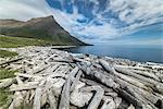 Driftwood from Siberia, Strandir Coast, Westfjords, Iceland, Polar Regions