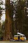 Man sitting by camper van under sequoia tree, Sequoia National Park, California, USA