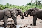 Small group of elephants, on the road to Okavango Delta, Botswana
