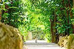 Garcinia Tree lines at Bise, Okinawa Prefecture, Japan