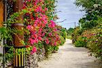 Taketomi Island, Okinawa Prefecture, Japan