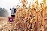 Combine harvester harvesting corn crop.