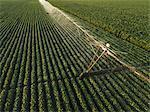 Irrigation bean in soybean field, aerial view.