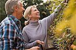 Smiling mature couple harvesting apples in garden