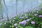 Miyazaki Prefecture, Japan