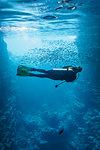 Young woman scuba diving underwater among school of fish, Vava'u, Tonga, Pacific Ocean