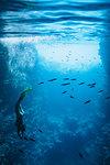 Young woman snorkeling underwater among fish, Vava'u, Tonga, Pacific Ocean