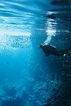 Woman scuba diving underwater among school of fish, Vava'u, Tonga, Pacific Ocean