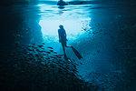 Woman snorkeling underwater among schools of fish, Vava'u, Tonga, Pacific Ocean