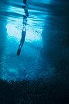 Young woman snorkeling underwater among schools of fish, Vava'u, Tonga, Pacific Ocean