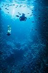 Man and woman snorkeling underwater among fish, Vava'u, Tonga, Pacific Ocean