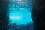 School of fish swimming underwater, Vava'u, Tonga, Pacific Ocean
