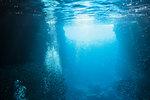 Schools of fish swimming underwater in tranquil blue ocean, Vava'u, Tonga, Pacific Ocean