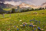 Turists walking on meadows of Funes valley, South Tyrol, Trentino Alto Adige, Bolzano province, Italy, Europe